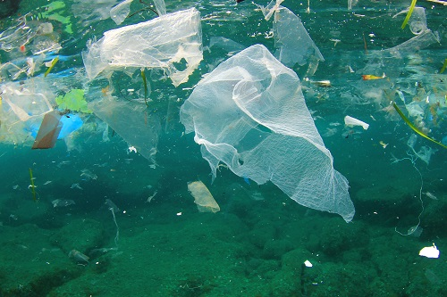 The impact of plastic bags on the environment and economy